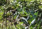 Adelaide Hills Permaculture 1