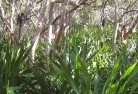 Adelaide Hills Permaculture 7