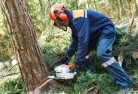 Adelaide Hills Tree cutting services 21