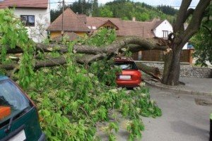 Kwikfynd Tree Cutting Services