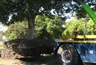 Adelaide Hills Tree felling services 4
